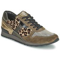 Cipők Női Rövid szárú edzőcipők Kennel + Schmenger LIZAN Teve
