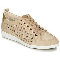 Cipők Női Rövid szárú edzőcipők Geox D MYRIA Bézs