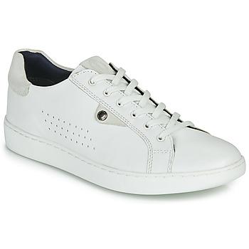 Cipők Férfi Rövid szárú edzőcipők Base London BUZZ Fehér