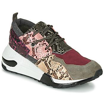 Cipők Női Rövid szárú edzőcipők Steve Madden CLIFF Sokszínű