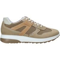 Cipők Férfi Rövid szárú edzőcipők IgI&CO 5129633 Bézs