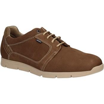 Cipők Férfi Oxford cipők Baerchi 5080 Barna
