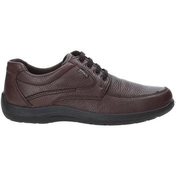 Cipők Férfi Rövid szárú edzőcipők Enval 4233511 Barna