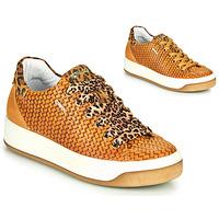 Cipők Női Rövid szárú edzőcipők IgI&CO SHOUHAI Okker-cserszínű