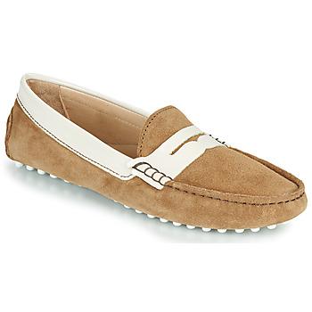 Cipők Női Balerina cipők  JB Martin 1TABATA Barna