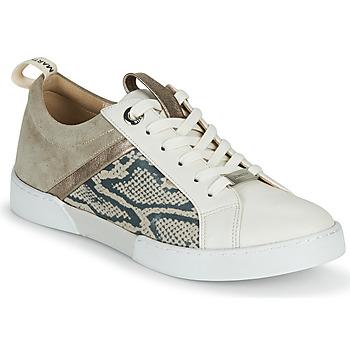 Cipők Lány Rövid szárú edzőcipők JB Martin GELATO Szürke / Fehér