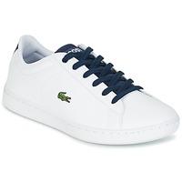 Cipők Gyerek Rövid szárú edzőcipők Lacoste CARNABY EVO Fehér / Tengerész