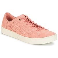 Cipők Női Rövid szárú edzőcipők Toms LENOX Bloom