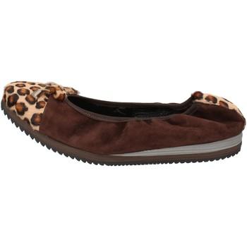 Cipők Női Balerina cipők  Calpierre ballerine marrone camoscio cavallino AD574 Marrone